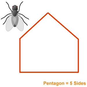 Insect Bug Screens Pentagon Shaped