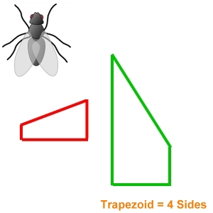 Insect Bug Screens Trapezoid Shaped