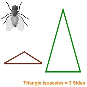 Insect Bug Screens Triangle Isosceles Shaped