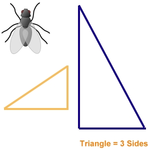 Insect Bug Screens Triangle Shaped