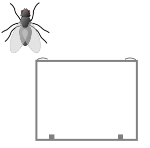 Insect Bug Window Screens Rectangular Shaped (for Windows)